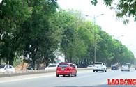 Cận cảnh hàng cây xanh 30 năm tuổi giữa đại công trường Phạm Văn Đồng