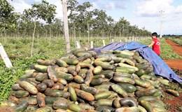 """Người dân cứ """"nhẹ dạ cả tin"""" doanh nghiệp, nông sản Việt còn xin giải cứu dài dài"""