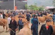 Chợ bò huyện Mèo Vạc