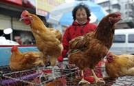 Cảnh báo cúm A/H7N9 từ Trung Quốc có thể lan vào Việt Nam