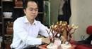 Linh chi bonsai tiền triệu hút khách đặt mua chơi Tết