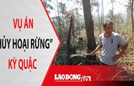 """NÓNG 24H: Khởi tố thêm 8 bị can trong vụ án """"hủy hoại rừng"""" kỳ quặc ở Lâm Đồng"""