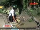Nông dân Bạc Liêu bơm nước trắng đêm để cứu lúa ngập úng vì mưa lớn
