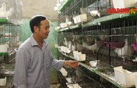 Kỹ sư điện bỏ nghề về nuôi chim thu nhập 70 triệu/tháng