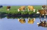 Sữa hữu cơ là gì?