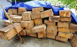 Bị mất chức vì để mất trộm 36 cây sa mu dầu quý hiếm