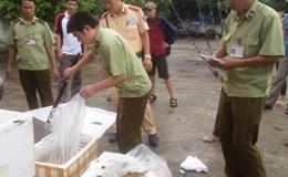 Bắt giữ gần 1,2 tấn nhộng tằm thối trên đường vào các quán ăn