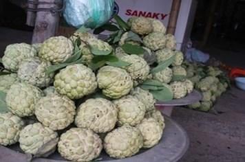 Bất thường thương lái Trung Quốc thu mua hạt na ở Lạng Sơn