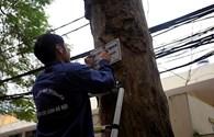 Treo biển trưng cầu ý dân về chặt cây... ngoài dự án