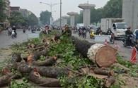 """Nghe Cù Trọng Xoay """"khóc"""" cây bị chặt hàng loạt tại Hà Nội"""