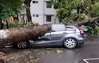Hàng loạt xe tiền tỉ tan nát dưới mưa giông tại Hà Nội
