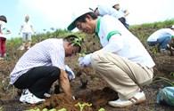 """Đẩy mạnh trồng rừng """"cứu"""" chè Shan Tuyết"""