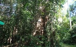 Dự án làm đường xuyên Vườn Quốc gia Cát Tiên: Không đồng bộ với quy hoạch rừng của tỉnh