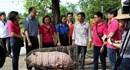 LienVietPostBank triển khai chương trình giải cứu đàn lợn tại Quảng Trị