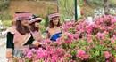 Muôn hoa khoe sắc tại Lễ hội hoa đỗ quyên Fansipan Legend