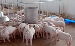 Hãy hỗ trợ người chăn nuôi