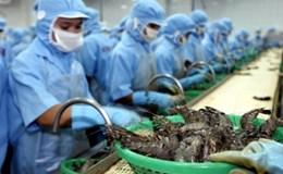 """Bộ Công Thương tiếp tục """"thúc"""" Úc bỏ lệnh tạm ngừng nhập khẩu tôm chưa nấu chín"""