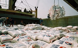 Cơ hội tốt với Việt Nam: Philippines có kế hoạch nhập khẩu 250.000 tấn gạo trong tháng 6