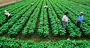 Miễn, giảm tiền sử dụng đất khi doanh nghiệp đầu tư vào nông nghiệp, nông thôn