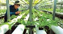 Gần 28.000 tỉ đồng cho vay nông nghiệp công nghệ cao