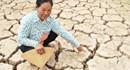 Việt Nam mất 15.000 tỉ đồng vì hạn hán, xâm ngập mặn lịch sử