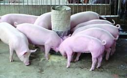 Phó Thủ tướng yêu cầu Bộ Công Thương kiểm soát tạm nhập tái xuất thịt lợn