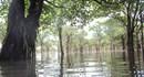 Rừng nước mặn Đồng Rui sẽ trở thành Khu bảo tồn đất ngập nước