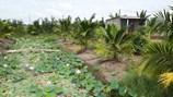 Có được chuyển mục đích sử dụng từ đất vườn sang đất ở?