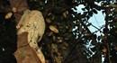 Tái thả tê tê Java vào Vườn quốc gia Cát Tiên