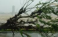 Bão số 11: Hình ảnh mới cập nhật tại Đà Nẵng lúc 9h57'