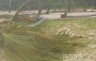 Bão số 11 tại Quảng Ngãi: Thiệt hại từ miền núi đến hải đảo