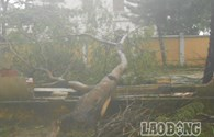 Bão số 11: Lý Sơn xác xơ sau bão