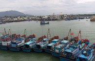 Bão số 12: Phần lớn tàu cá ở Quảng Ngãi đã neo đậu an toàn