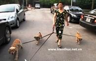 Nghề dắt chó đi dạo: Hưởng lương bằng USD và biết 2 ngoại ngữ