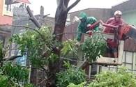 Một dân quân trọng thương khi chống bão số 10