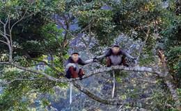 Bảo vệ Sơn Trà: Đà Nẵng lựa chọn thiên nhiên hay tiếp tục khai thác tài nguyên?