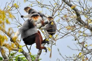 """Chủ tịch Hội Bảo tồn Đa dạng Sinh vật Thế giới: """"Đừng phát triển du lịch để hủy hoại bản sắc Sơn Trà"""""""