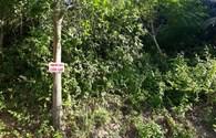 """Nhiều điểm ở rừng Sơn Trà bị phát quang """"sạch sẽ"""", cắm biển báo """"cấm vào"""""""
