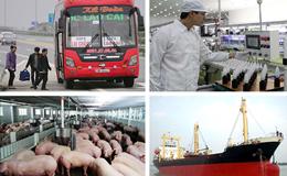 """Kinh tế 24h: Doanh nghiệp vào cuộc """"giải cứu"""" lợn; chưa dẹp được """"bến cóc"""" tại Hà Nội"""