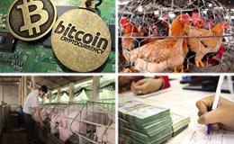 """Kinh tế 24h: Trứng, thịt gà công nghiệp """"rẻ chưa từng thấy""""; Tiền ảo Bitcoin """"làm mưa làm gió"""""""