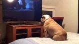 Cười ngặt nghẽo với chú chó mê phim ma