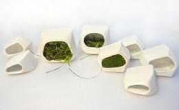 Công nghệ 360: Bạn có biết rêu cũng có thể sản xuất ra điện