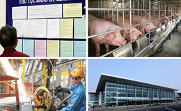 """Kinh tế 24h: """"Vỡ trận"""" giải cứu lợn; Hé lộ 3 kịch bản thị trường bất động sản cuối năm 2017"""