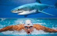 """Video: Dù được trang bị công nghệ tối tân nhưng Michael Phelps vẫn bị cá mập trắng cho """"ngửi khói"""""""