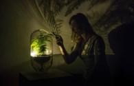 Công nghệ 360: Độc đáo với ý tưởng biến cây xanh thành đèn thắp sáng trong đêm