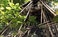 """Nhà trên cây của """"người rừng"""" chưa bị đốt như công bố"""