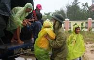 Quảng Nam: Một người chết khi chặt cây phòng, chống bão