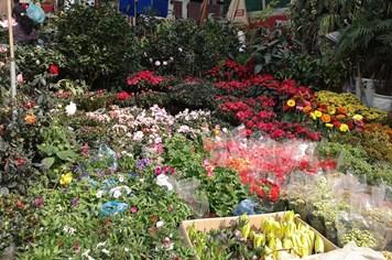 Hà Nội: Cập nhật giá hoa tươi ngày 20 tháng Chạp