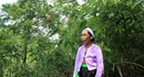Bà lang xứ Mường với biệt tài chữa bệnh sâu quảng bằng lá rừng
