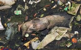 Cần xử lý nghiêm tình trạng vứt xác động vật bừa bãi ra môi trường